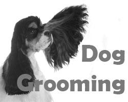 Dog Groomers Teignmouth