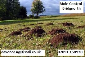 Mole Control Bridgnorth