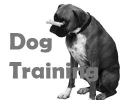 Dog Training Teignmouth