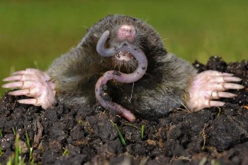 Mole Control Dorset and Hampshire