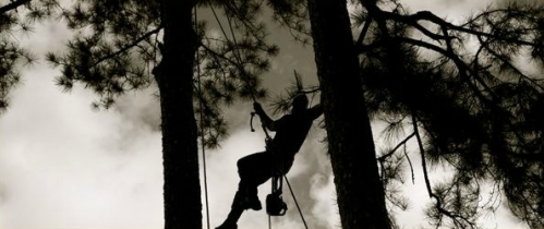 Shadow Tree Climber