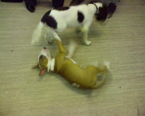 Dog Training Woking