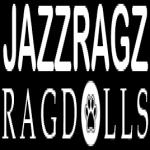 Jazzragz Ragdolls