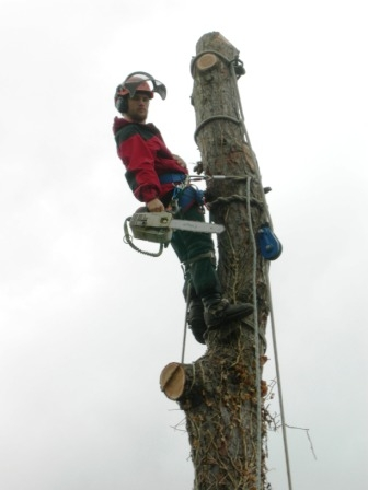 Willaim Wolf Tree Surgeon Malmesbury