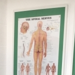 Nerve chart in our Andover chiropractic centre