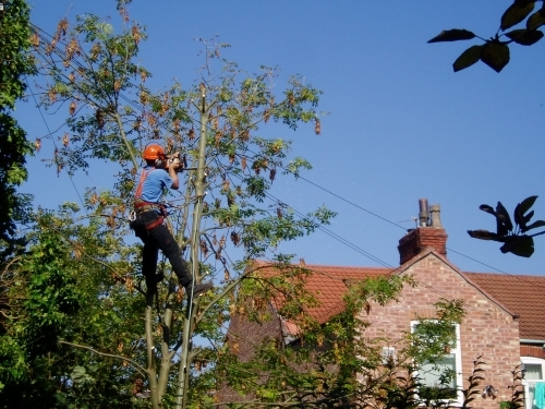 Utility tree surgery to clear BT cables