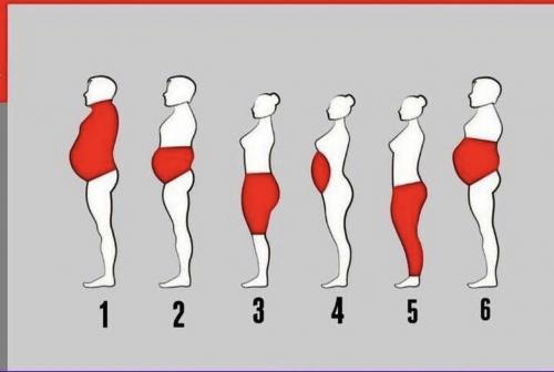 Body Transformation Program
