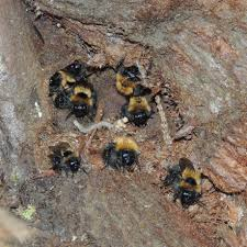 Bee Swarms and Bumbles