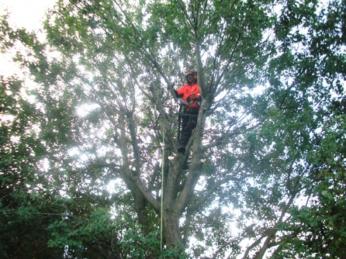 Tree Felling, Hedge Pruning, Ground Clearance Renfrewshire