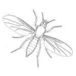 Insect Research & Development Ltd