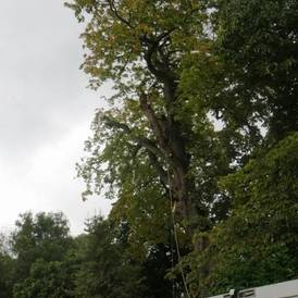 Tree pruning Warwickshire