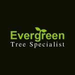 Evergreen Tree Specialist