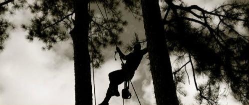 Shadow Tree Climber