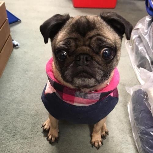 Dog Clothing