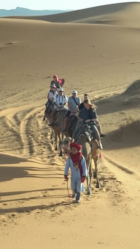 Came Trekking, Sahara Desert, Morocco