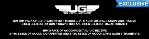 Sensible Seeds Cannabis Seeds Offer