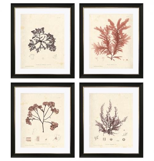 Marine Botanical Prints with Black Frames