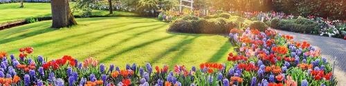 Lawn Care Seasonal Treatments